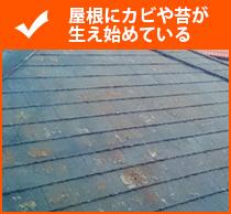 屋根にカビや苔が生え始めている